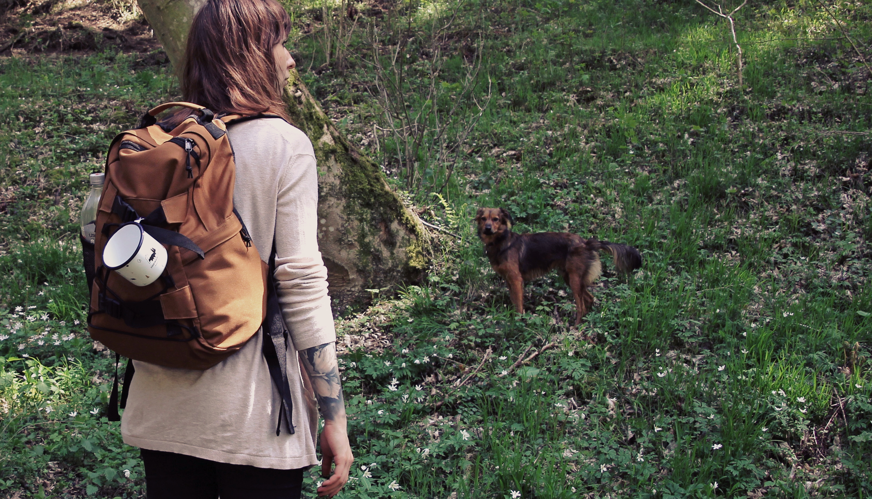 Waldwanderung durch die Eifel