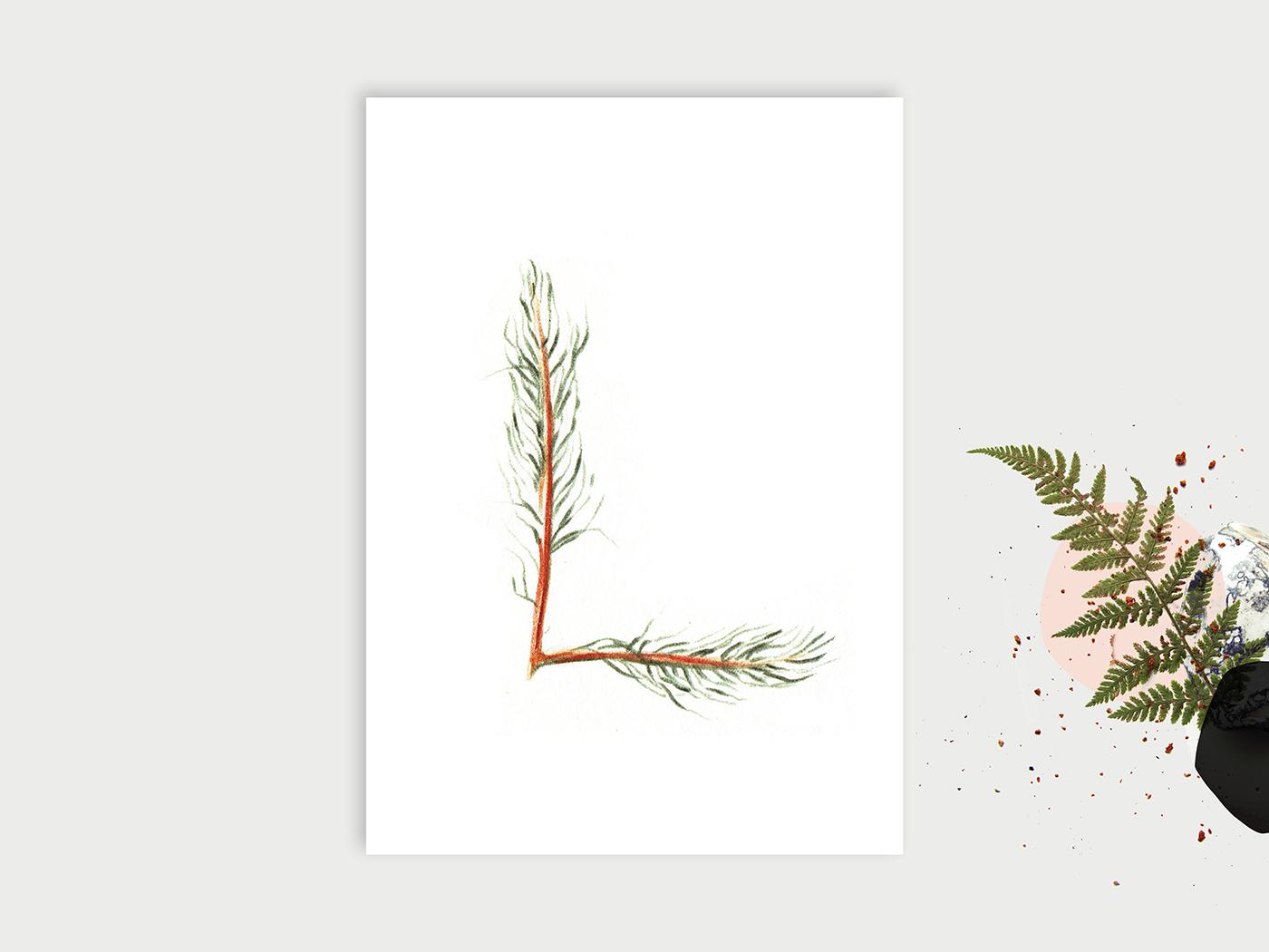 Wald-ABC_L